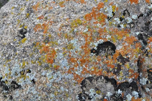 Lichens up close